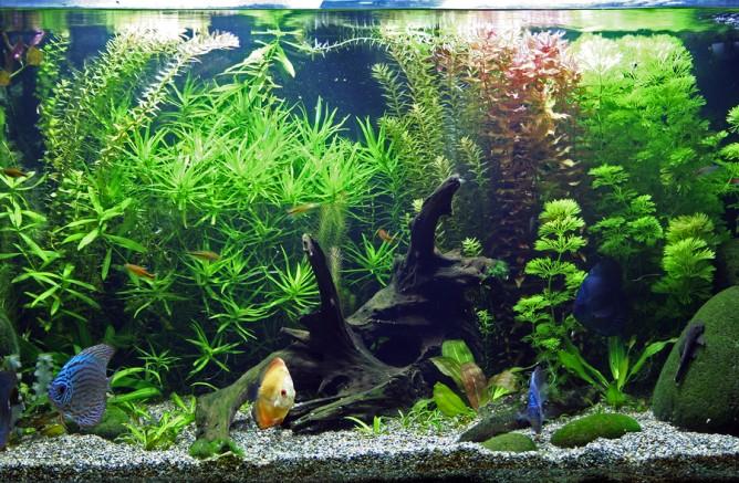 starting an aquarium